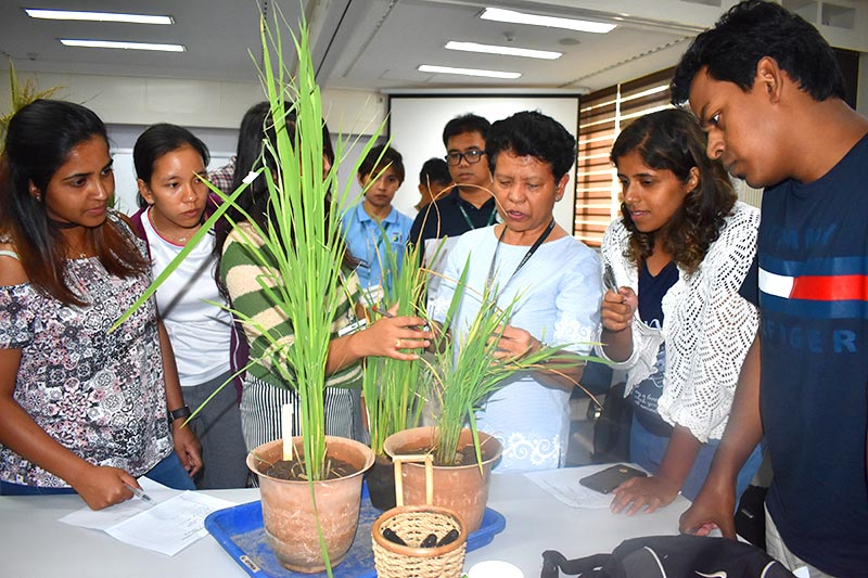 Rice research to production course